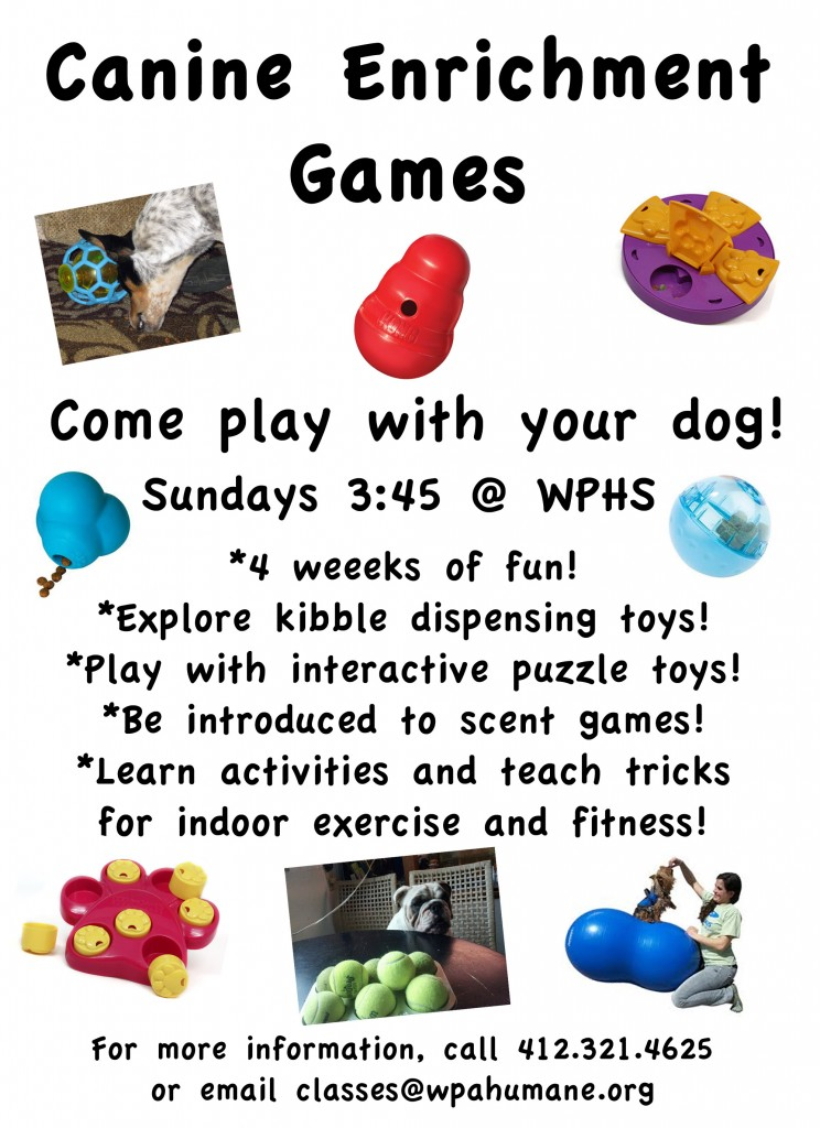 Classroom Enrichment Ideas ~ Canine enrichment games class success just clicks