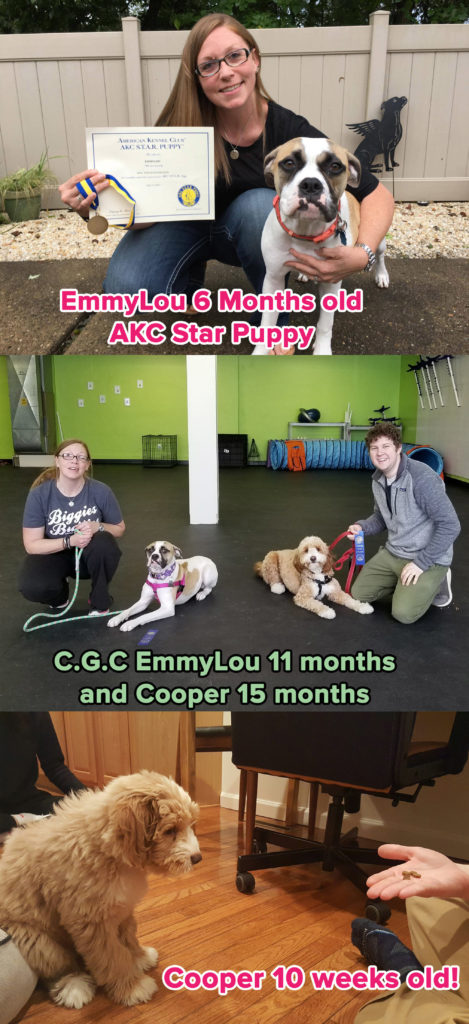 Growin Up Pups Puppy Program To Set Families Up For Success